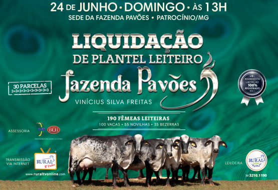 pavoes 2